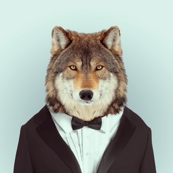 Portraits-of-Animals-Dressed-Like-Humans-by-Ago-Partal-2